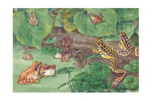 A Variety of Frogs Found in the Northern United States by Hashime Murayama
