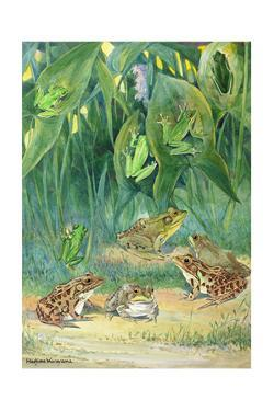 A Variety of Tree and Meadow Frogs Await Low Flying Insects by Hashime Murayama