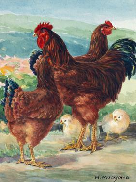 A View of Rhode Island Red Chickens with their Young by Hashime Murayama