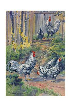 A View of the Silver Spangled Variety of Hamburgs by Hashime Murayama