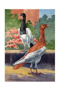 A View of Two Magpie Pigeons by Hashime Murayama