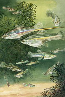 A View of Viviparous Fish by Hashime Murayama