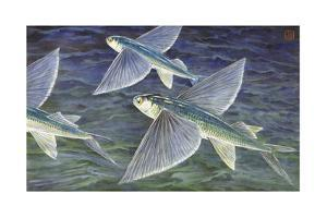 California Flying Fish Glide over the Sea by Hashime Murayama