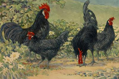 Four Blue Andalusian Chickens, or Historically Blue Minorca Chickens by Hashime Murayama