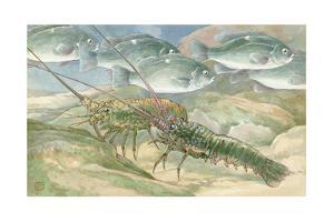 Opaleye Perch Fish Swim by Rock Lobsters by Hashime Murayama