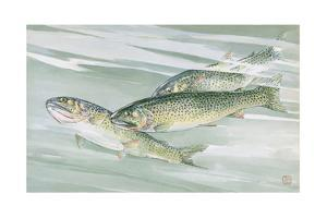 Painting of a Trio of Cutthroat Trout by Hashime Murayama