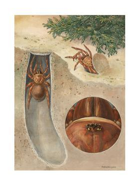 Painting of Spider in and Exiting its Shelter and Close-Up of the Eye by Hashime Murayama