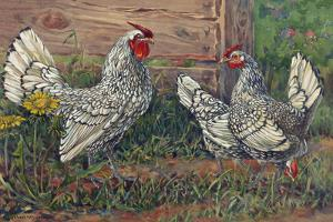 Silver Sebright Bantams are known for the Lacing on their Feathers by Hashime Murayama