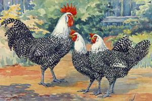 Three Silver Campine Chickens Originally from Beligum's Campine Region by Hashime Murayama