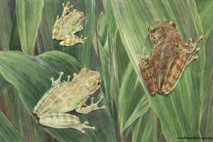 Tree Toads Change Color Depending on the Humidity of the Atmosphere by Hashime Murayama
