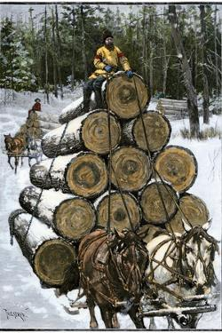 Hauling Logs with a Horse-Drawn Sledge in Northern Wisconsin, 1880s
