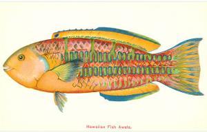 Hawaiian Fish, Awela