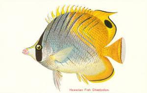 Hawaiian Fish, Chaetodon