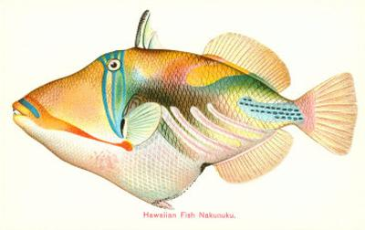 Hawaiian Fish, Nakunuku