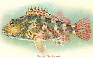 Hawaiian Fish, Oapukai