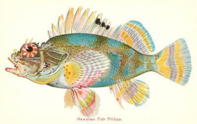 Hawaiian Fish, Pilikoa