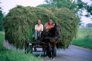 Hay transport, Great Hungarian Plain, Hungary