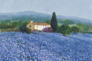 Flax Field, Provence by Hazel Barker