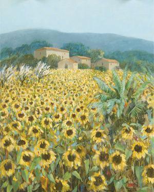 Late Sunflowers Near Santa Lucia, Tuscany by Hazel Barker