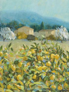 Lemon Grove, Tuscany - Observation by Hazel Barker