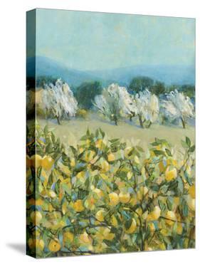 Lemon Grove, Tuscany - Perception by Hazel Barker