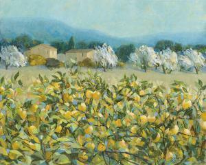 Lemon Grove, Tuscany by Hazel Barker