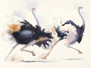 In a Hurry by Hazel Soan