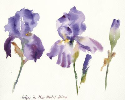 Irises in the Hotel Dieu