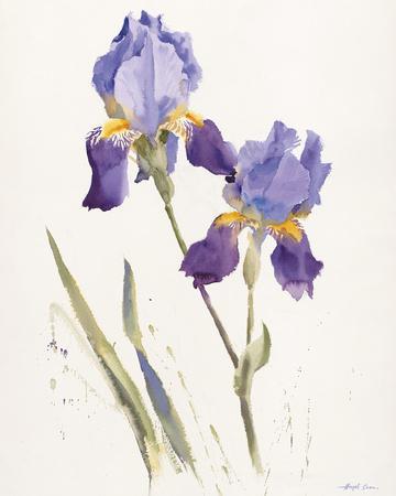 Opulent Irises