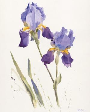 Opulent Irises by Hazel Soan