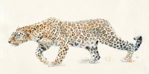 Stealth by Hazel Soan