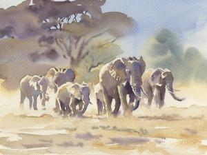 The Herd by Hazel Soan