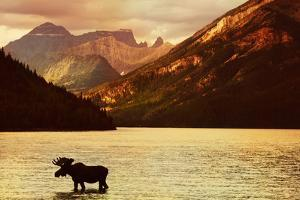 Moose in Lake with High Mountains in Background at Sunset by hdsidesign