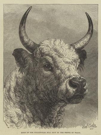 https://imgc.allpostersimages.com/img/posters/head-of-the-chillingham-bull-shot-by-the-prince-of-wales_u-L-PUSNQP0.jpg?p=0