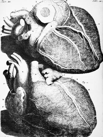 https://imgc.allpostersimages.com/img/posters/heart-anatomy-18th-century_u-L-Q1HOE8M0.jpg?artPerspective=n