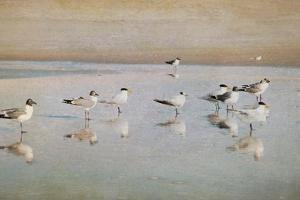 Coastal Reflections by Heather Jacks