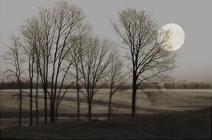 November Moon by Heather Jacks