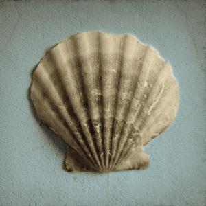 Seashell Study II by Heather Jacks