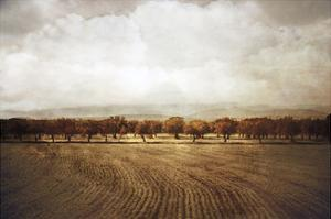 The Olive Grove by Heather Jacks