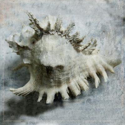Shell Diary 4 by Heather Johnston