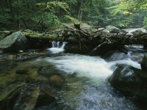 A Babbling Brook in the New Hampshire Woods by Heather Perry