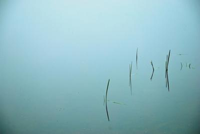 A few grasses growing in calm blue water. by Heather Perry
