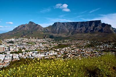 Table Mountain Looms Above the City of Cape Town by Heather Perry