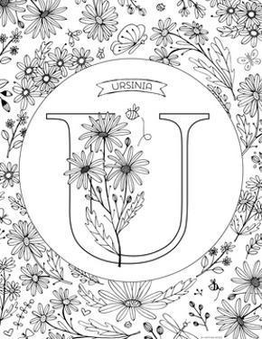 U is for Ursinia by Heather Rosas