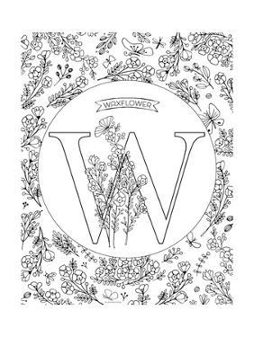 W is for Waxflower by Heather Rosas
