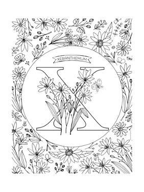 X is for Xeranthemum by Heather Rosas