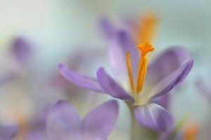 1526_Pastel spring by Heidi Westum