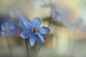 2690_Blooming ll by Heidi Westum