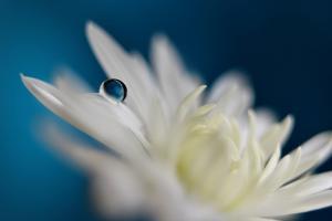 5051_The blue one by Heidi Westum