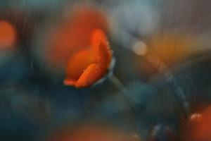 7929_I do my crying in the rain by Heidi Westum